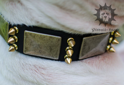 English Bull Terrier Dog Collar UK