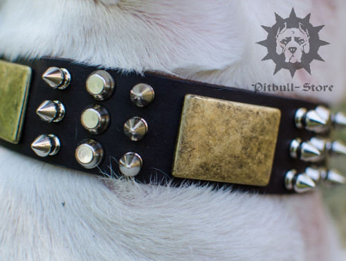 English Bull Terrier Leather Collar
