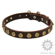 Stylish Dog Collar with Studded Decoration | Stafford Collars