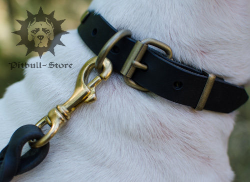 English Bull Terrier Leather Collar UK