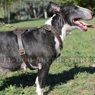 Dog Tracking and Running Leather Harness for Bull Terrier