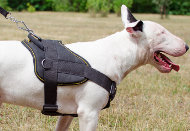 Dog Training Harness for Bull Terrier | Dog Sport Harness, Nylon