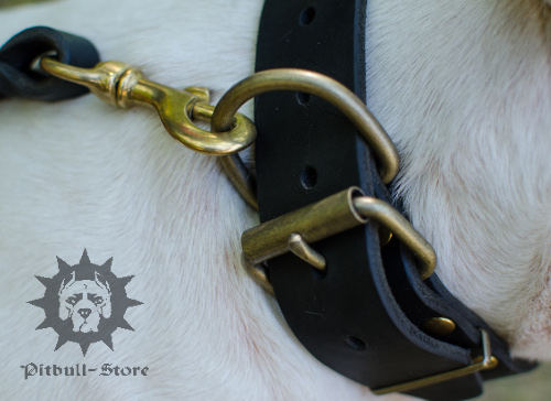Reliable Gorgeous Dog Collar