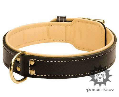 Padded Leather Dog Collar UK