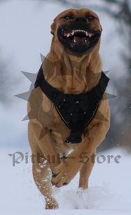 Large Dog Harness UK | Presa Canario BEST