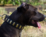 Trendy Dog Collar for Pitbull and Amstaff, Dog Collars Boutique