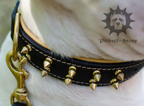 English Bull Terrier Leather Collars