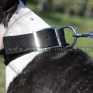 Nylon Dog Collar Strong with Belt Buckle for Bull Terrier