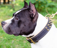 Padded Dog Collar for Amstaff | Spiked Leather Dog