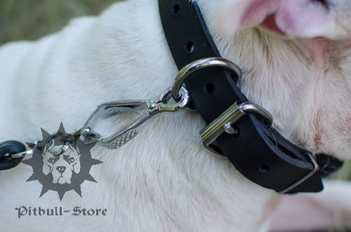 Bull Terrier Collar UK