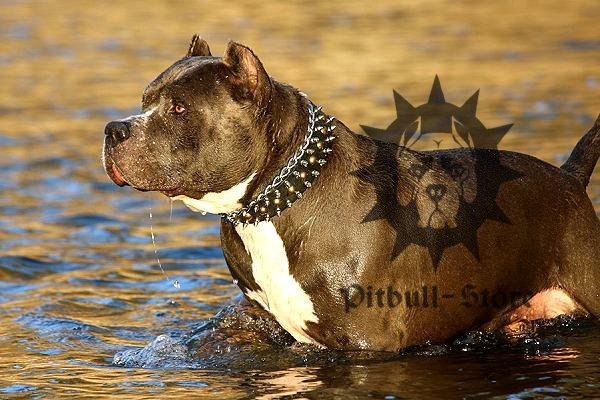 World Pitbull Database | Dog Breeds Picture