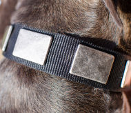 Pitbull Collar with Wide Nickel Plates, Nylon Dog Collar Wide