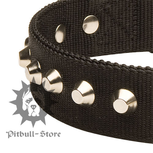 Amstaff Fancy Dog Collar