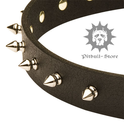 Fashion Dog Collar UK