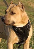 Heavy Duty Dog Harness for Pitbull