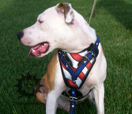 Pitbull Harness of 100% Leather