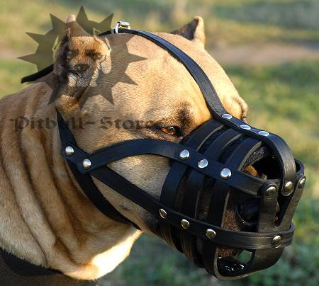 Best padded leather dog muzzle for all dog breeds