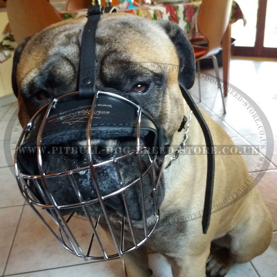 Wire Dog Muzzle for Pitbull and Staffy, Perfectly Ventilated