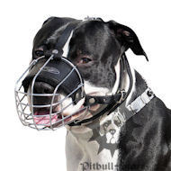 Staffordshire Bull Terrier Wire Muzzle Covered with Black Rubber