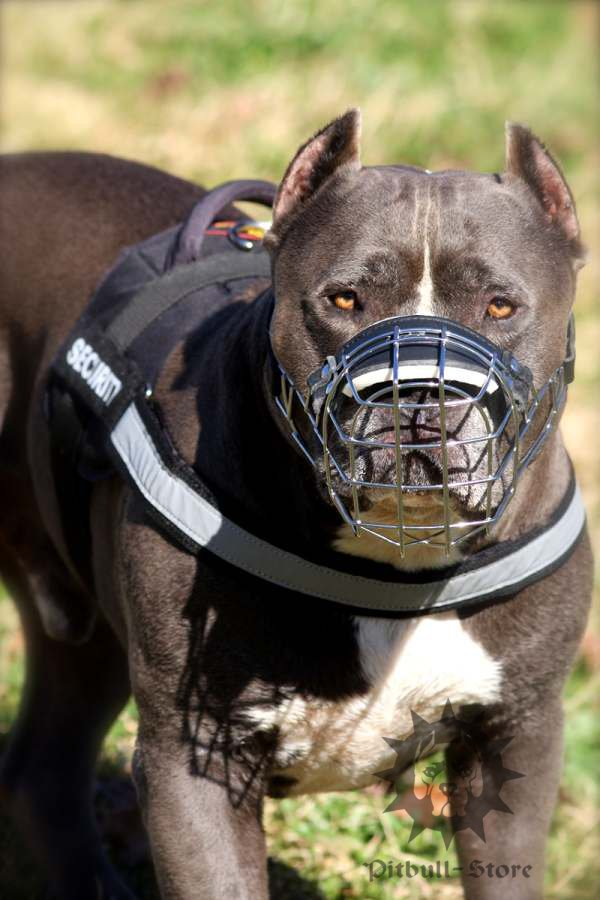 Reflective dog harness for