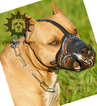 Designer Dog Muzzle with Barbed Wire Ornament for Pitbull
