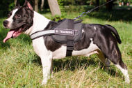 Reflective Dog Harness for Staffy | Dog Control Harness