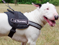 Reflective Dog Harness for Bull Terrier Training & Walking
