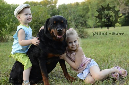 Rottweiler with Children
