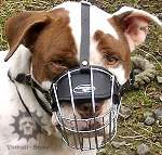 Wire Dog Muzzle for English Staffy | Basket Muzzle for Walking