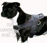 Staffordshire Bull Terrier Nylon Harness for Tracking/Pulling