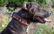 Staffordshire Collar | Designer Dog Collar with Flames, Leather
