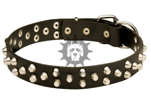 Quality Dog Collar