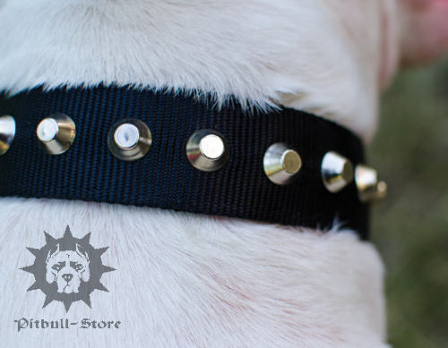 Bull Terrier Dog Collar UK
