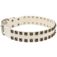 Wide Dog Collar with Studs for Staffy | White Leather Dog Collar