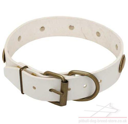 Dog Fashion Collar