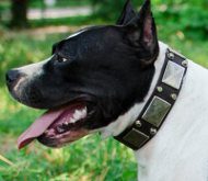 Leather Dog Collar with Nickel Plates & Studs for