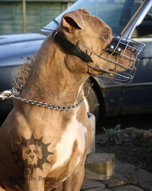 Staffordshire Bull Terrier Wire Basket Muzzle for