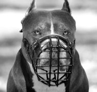 Pitbull Wire Dog Muzzle