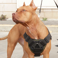 Pitbull Dog Harness UK
