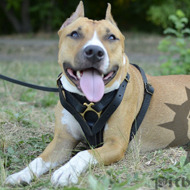 Top Grade Dog Tracking Harness for Amstaff