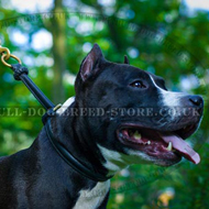 Amstaff Choke Collar for Success in Obedience