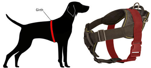 How to Measure Staffy for Nylon Harness
