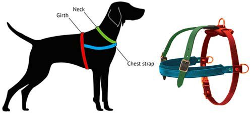 Harness Size for a Staffy