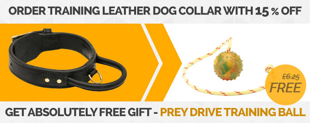 15% OFF for Dog Collar and FREE Dog Ball