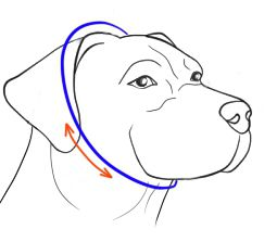 Size Staffy for Pinch Collar