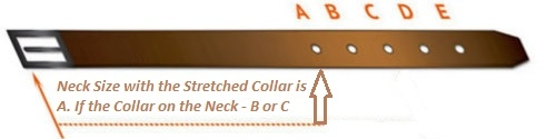 How to Size a Dog Collar