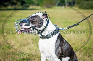Best Basket Muzzle for Pitbull