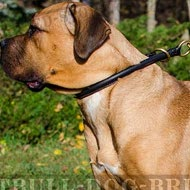 Best Collar for Cane Corso Behavior Training