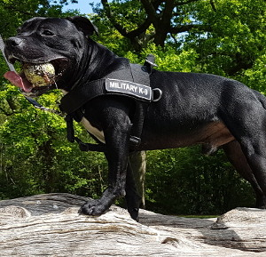 Best Dog Harness 2020