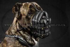Best Dog Muzzle for Large Dogs